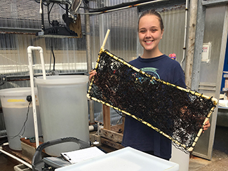 Summer BES student Zoe Sallada holds up a vertical panel for growing Dulse seaweed. Photo by Ford Evans.